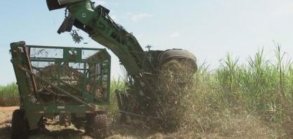 Produtores de cana da região noroeste paulista estão otimistas com safra mais lucrativa