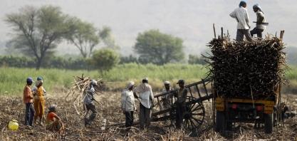 Petróleo, dólar e encerramento da safra da Índia valorizam preços do açúcar no mercado externo