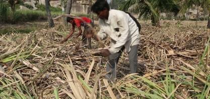 Índia inicia construção de sua primeira planta de etanol celulósico