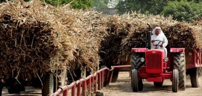 Índia deverá produzir menos açúcar que o esperado em 2016/17, diz associação