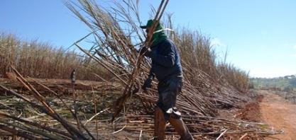 Trabalho aprova seguro-desemprego para cortadores de cana-de-açúcar