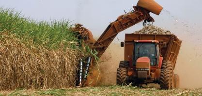 Instituições de pesquisa se unem e desenvolvem novas tecnologias para a cana-de-açúcar