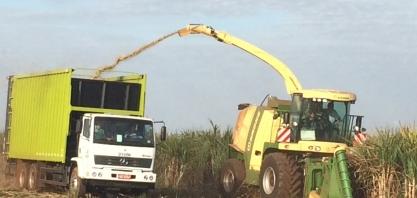 Usina Santa Fé inicia colheita de cana energia