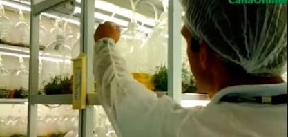 Bio reator de Imersão Temporária - Biofábrica da Syngenta