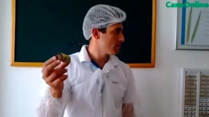 Laboratório da biofábrica - Biofábrica da Syngenta