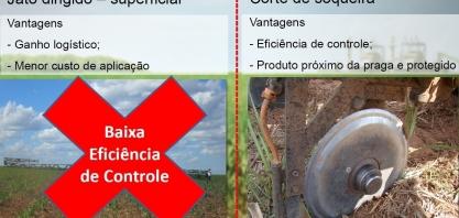 A eficiência da aplicação de inseticidas cortando a soqueira no controle do Sphenophorus levis