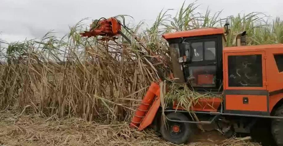 China promete novas medidas para aumentar mecanização do setor agrícola