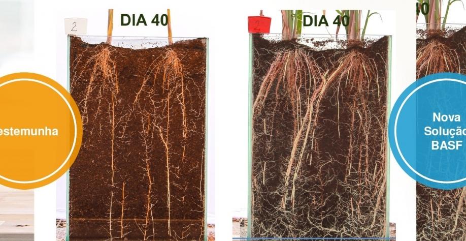 União entre produtos químico e biológico gera tecnologia inédita para o cultivo da cana-de-açúcar