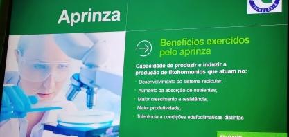 Com novo inoculante microbiológico a cana ganha sistema radicular mais robusto e com maior capacidade de absorção de nutrientes