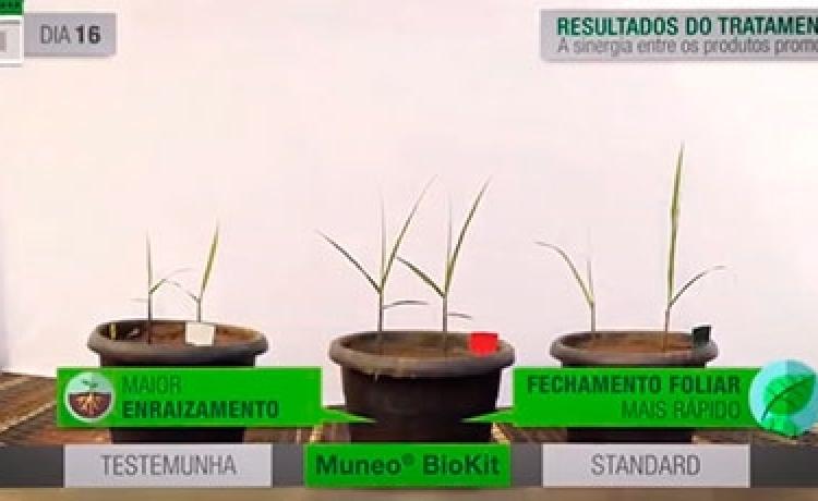 Veja um comparativo de 60 dias com o uso de Muneo® BioKit