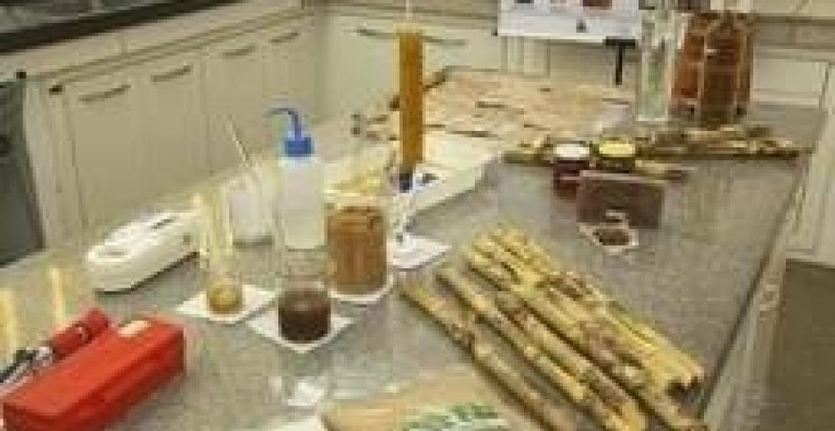 Pesquisa é desenvolvida para diversificar produtos da cana-de-açúcar
