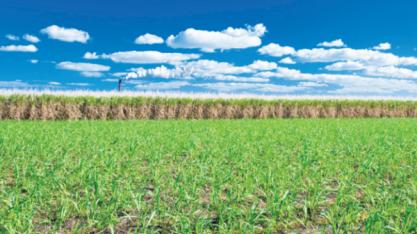 Olam International vai acabar com operação de comércio de açúcar, diz porta-voz