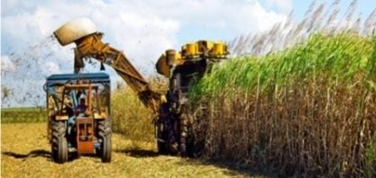 Inscrições abertas para novo curso cultivo e produção de cana-de-açúcar