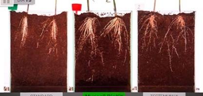 Veja um comparativo de 40 dias com o uso de Muneo® BioKit