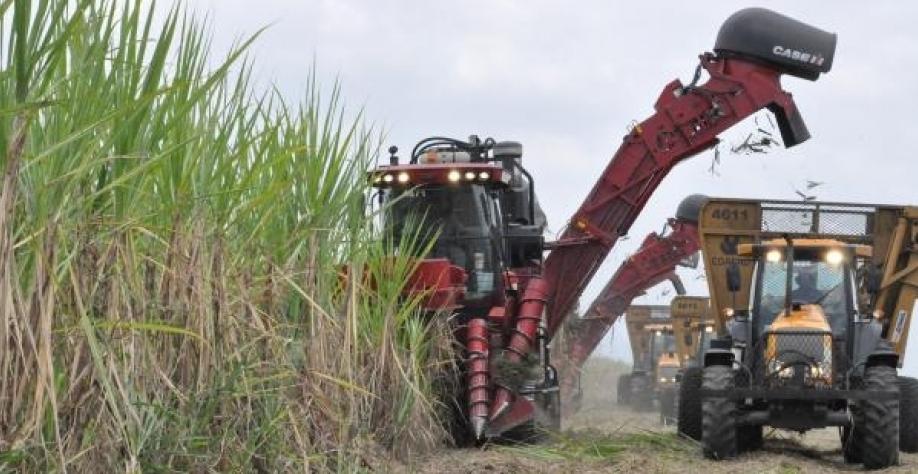 Usina de cana-de-açúcar é classificada como