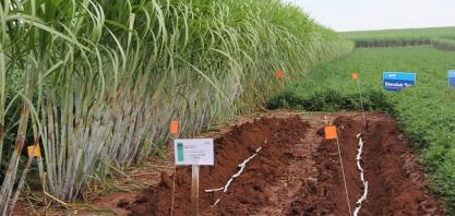 Secretário de agricultura diz que SP está aberto para receber investidores