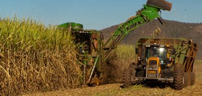 Inscrições abertas para curso sobre cultivo e produção de cana-de-açúcar