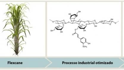 Flexcane - cana otimizada para processo industrial e aumento do valor nutricional das forrageiras