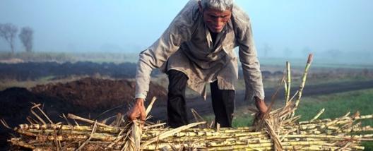 Seca deve prolongar queda de produção de açúcar da Índia