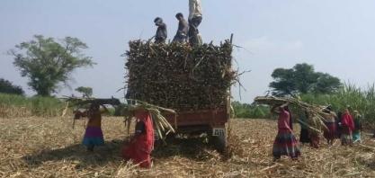 Usinas de açúcar da Índia devem US$ 2,8 bi a produtores de cana, diz Isma