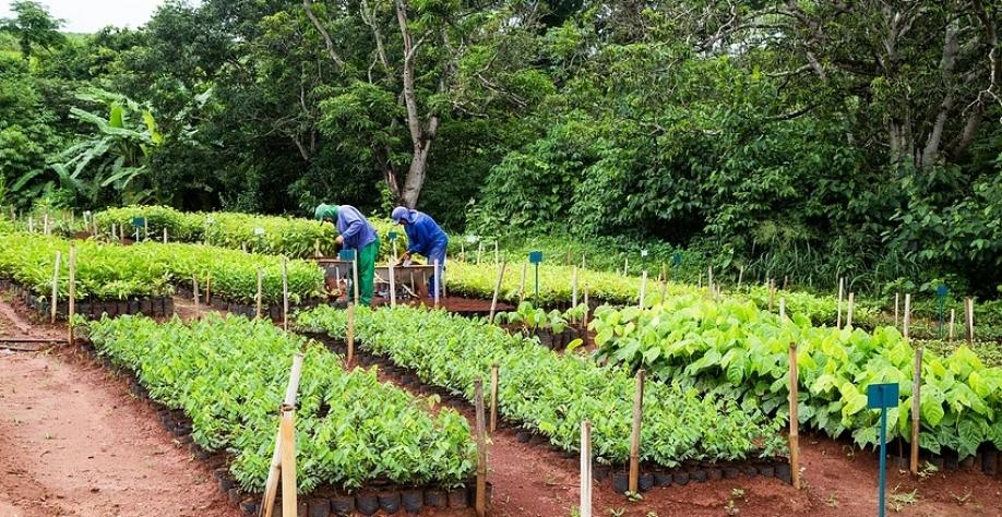 CRV Industrial realiza reflorestamento de áreas...