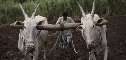 China, UE e Índia na disputa pelo comando da FAO