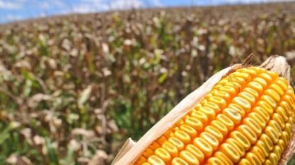 Demanda por etanol de milho deve saltar em mais 70% em Mato Grosso