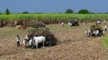 Quase tudo pronto para denunciar índia na OMC