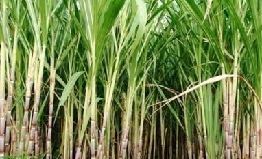 Excesso de tributos sobre etanol brasileiro estrangula setor, diz FEPLANA