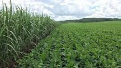 Soja supera o milho em área plantada e segue em expansão no estado de São Paulo, aponta IEA