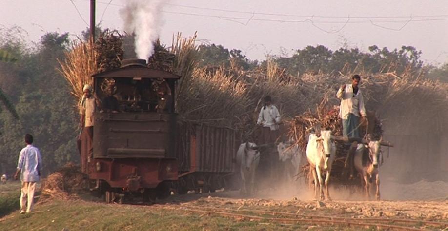 Açúcar: produção da Índia em 2018/19 atinge 18,52 milhões de t até 31 de janeiro, alta de 8,15%