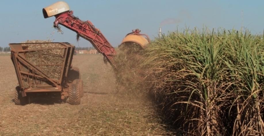 Conab realiza pesquisa de campo para levantar dados sobre cana-de-açúcar
