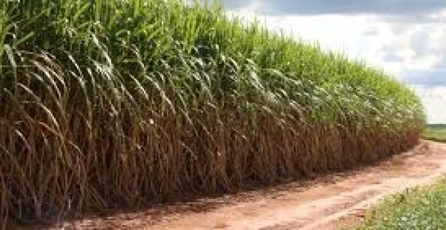Agricultura mais produtiva