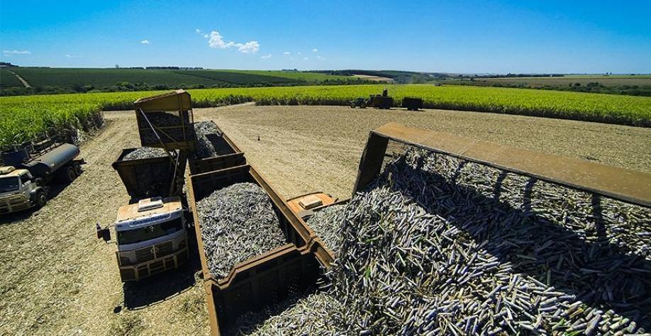 Usina Lins deve moer 3,1 milhões de toneladas de cana-de-açúcar na safra 2019/2020