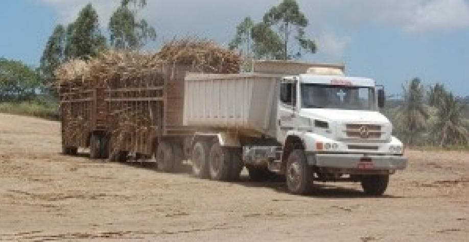 A usina Pindorama registra a segunda maior safra de cana da história