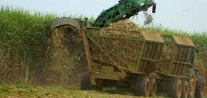 Atraso em colheita de cana no Brasil pode surpreender operadores na ICE