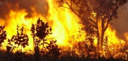 TJ-SP afasta responsabilidade objetiva de usina por incêndio em canavial