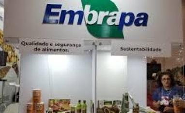 Lucro Social da Embrapa é de R$ 43,52 bilhões em 2018