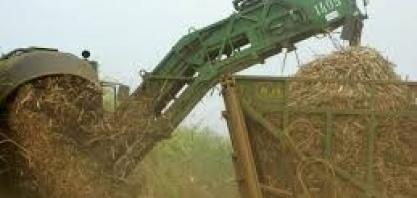 Com chuvas normais, JOB estima 570 mi/t cana, mais 2 de açúcar e 28.3 bi/l de etanol