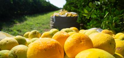 Safra de laranja 2018/19 no cinturão de SP e MG se encerra em 285,98 milhões de caixas