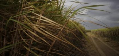Grupo Moreno considera venda de usina de cana, diz CEO