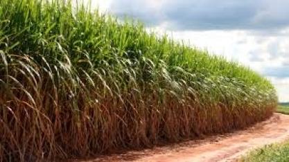 Mix de cana para etanol e açúcar em 19/20 pode repetir safra anterior, diz Unica