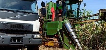 Brasil deve colher 677 mi de t de cana-de-açúcar em 2019, diz IBGE