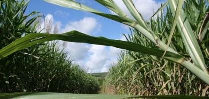 Produção de etanol cresce 35% no Estado