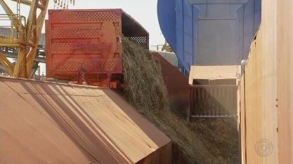 Produtores da região noroeste paulista estão otimistas com a safra da cana-de-açúcar