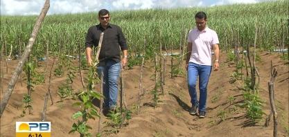 Paraíba Rural: veja as vantagens da técnica da rotatividade no plantio da cana-de-açúcar