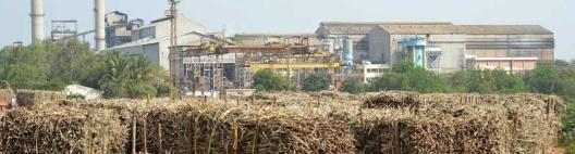 Produção global de açúcar deve avançar 1% em 2019/20, diz USDA
