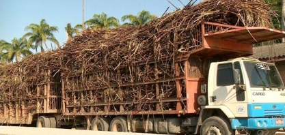 Safra da cana de açúcar pode gerar até 5 mil empregos, ES