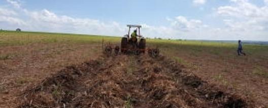 Manejo do palhiço no sul de Mato Grosso do Sul prejudica canavial