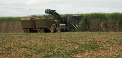 Cultivo de cana-de-açúcar entra como opção em solos arenosos